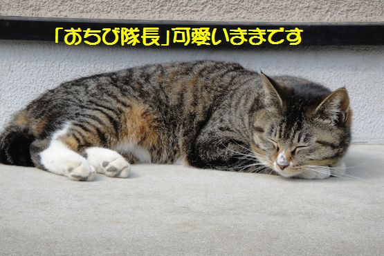 4.26おちび隊長.jpg