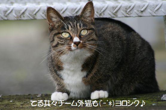 おちび201101.jpg